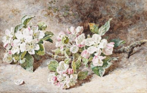 Apple Blossom, Helen Cordelia Angell (1847-1884)